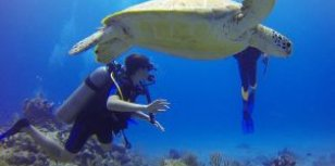 De mooiste duikbestemmingen van Riviera Maya