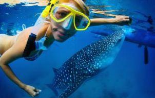 Zwemmen met haaien op Isla Holbox